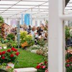 Let the RHS Chelsea Flower Show inspire your next garden update