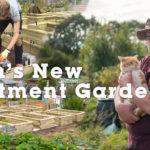 Seans Allotment Garden
