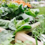 Growing Winter Veg in YourWoodBlocX Raised Beds