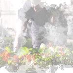 Problem Weeds.. Ground Elder