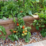 How to turn your Raised Beds into Hot Beds
