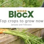 Top crops to grow now