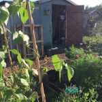 National Allotments Week 2018