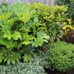 WIN one of three Garden on a Roll autumn borders