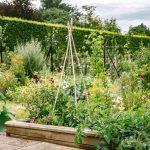 Detox your garden in 2019