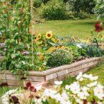 Natural gardening - Pest Control