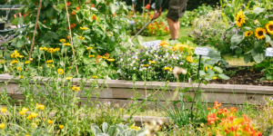 National Gardening Week Q&A